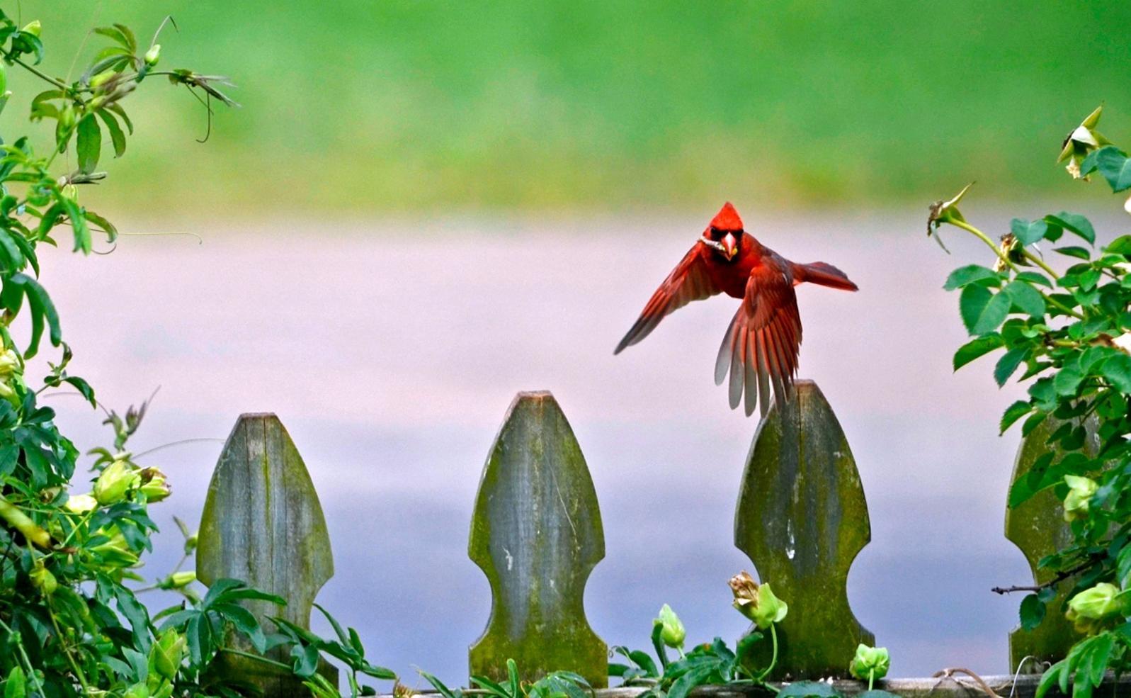 How To Do A Bird Sit Audubon New York