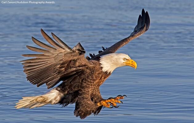 Become a Member of the Montezuma Audubon Center