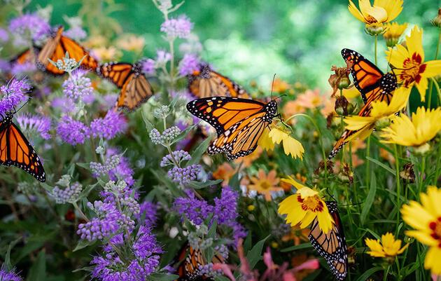 2021 Spring Benefit: Art & Music in the Gardens