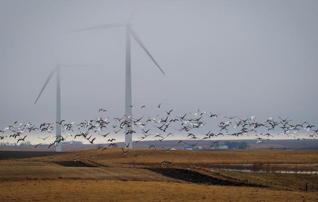 Renewable Energy and Birds