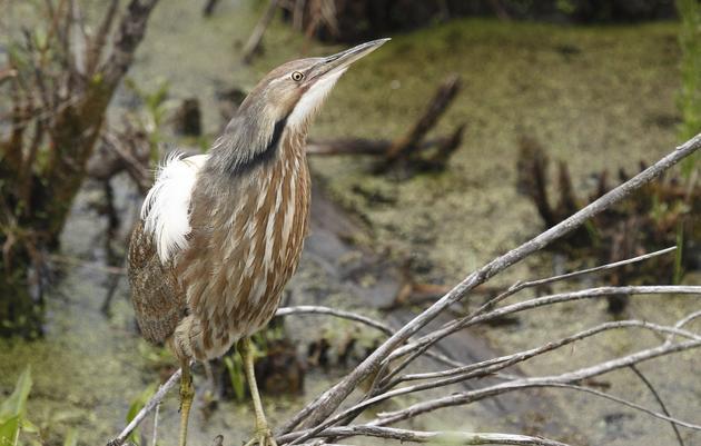 RamsHorn-Livingston Audubon Sanctuary