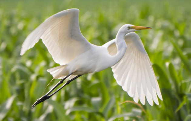 New York leads Eight States in Filing Federal Lawsuit to Restore Bird Protection Law