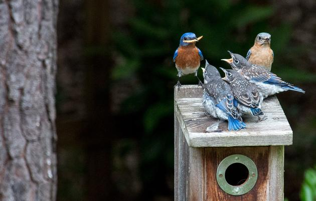 A Guide to Nesting Birds in New York
