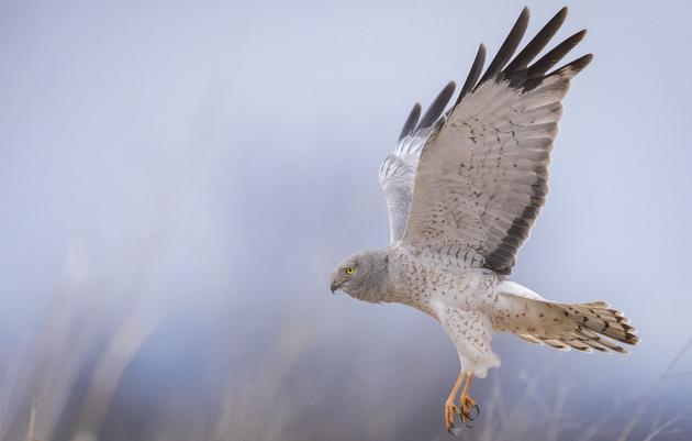 Look Up! Hawkwatch is here in New York