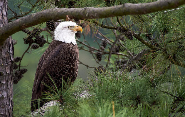 Audubon New York Statement on Governor Andrew Cuomo's 2021 State of the State Address