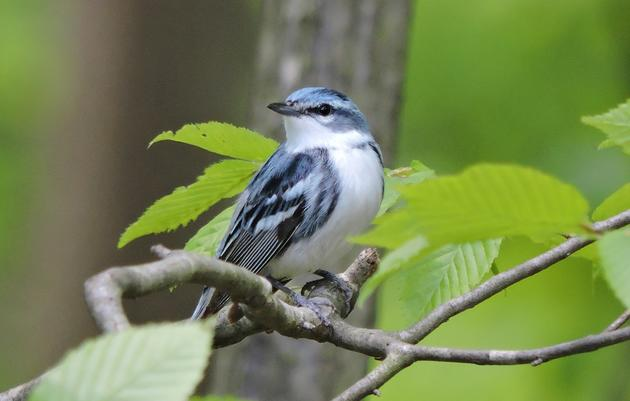 Managing Forests for Birds: A Landowner's Guide