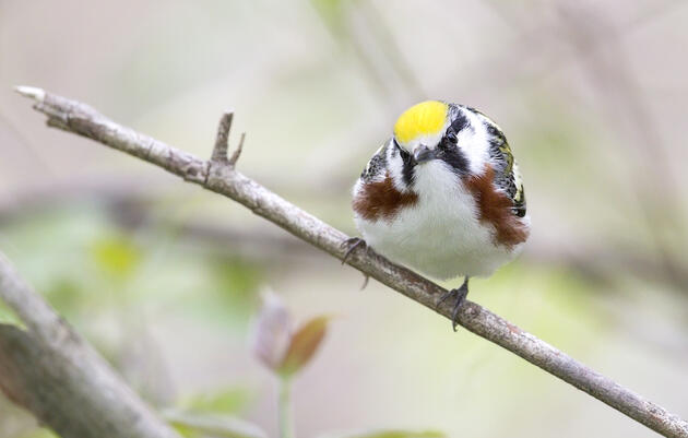 How one of New York's largest landowners manages forests for birds