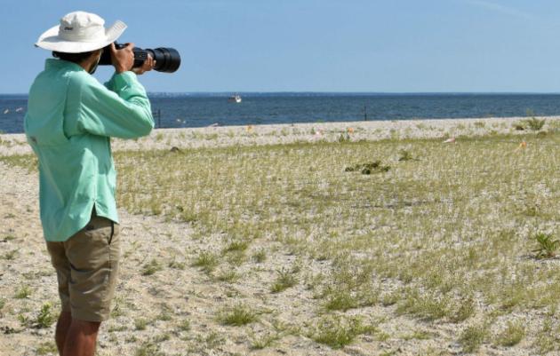 A Biologist's Secret to Beach-nesting Bird Photography