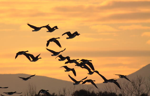 Governor Cuomo Announces Lights Out New York Initiative to Protect Migratory Birds