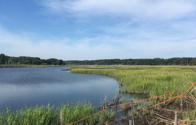 """Audubon Statement on """"Clean Water, Clean Air and Green Jobs Environmental Bond Act"""" and Clean Water Infrastructure Funding"""