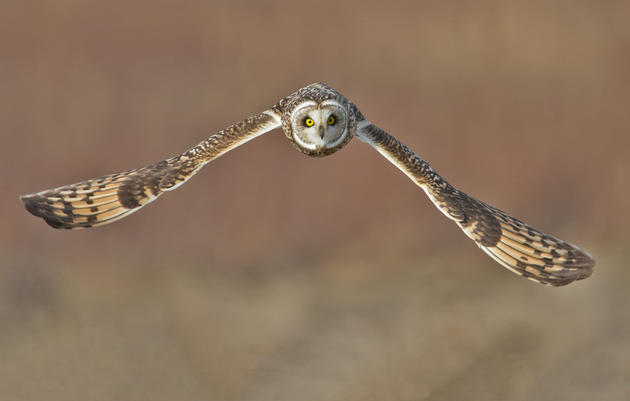 Audubon & Friends of the IBA Applaud New Bird-friendly Legislation Benefiting Washington County