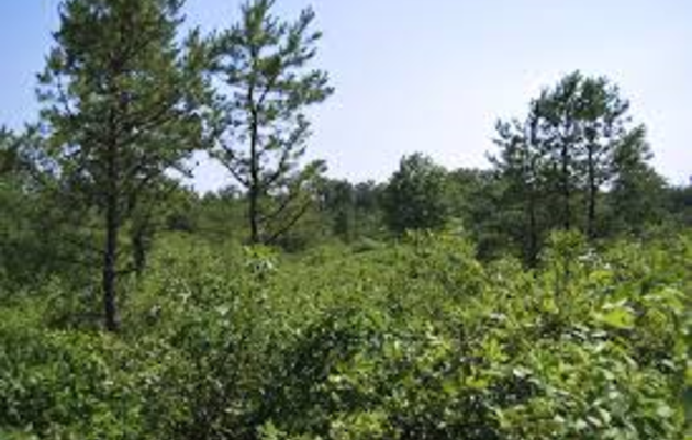 Healthy Forests: Forest Management for Birds