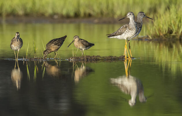 Northern Montezuma Birding Tour