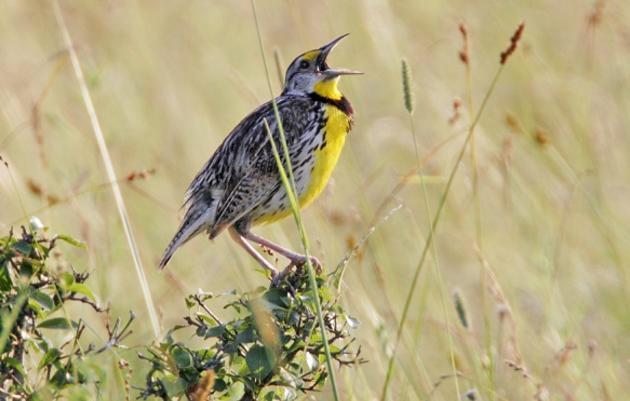 Grasslands: Connecting Birds, People & Communities