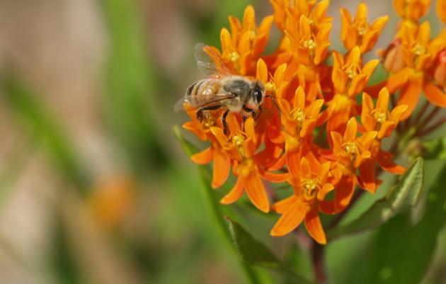 WATCH: Native Plants and Pollinators