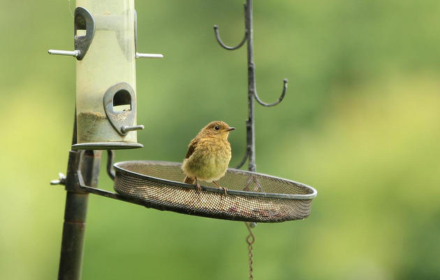 Attracting Birds to Your Feeder