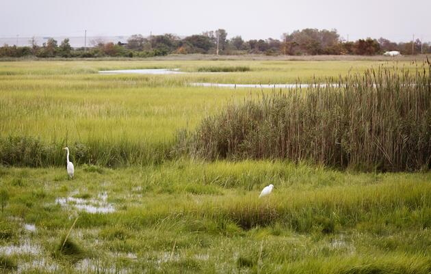 Long Island Sound Area Salt Marsh Projects Aim to Create More Resilient Coastline