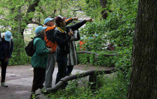5 Tips for Urban Birding