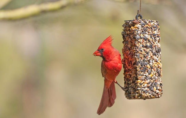 Guides to Bird Feeding