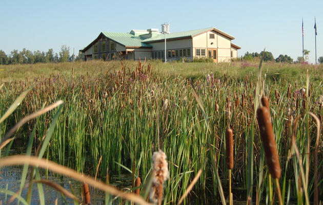 FL1 DAILY: Annual benefit, species spotlight, and late-spring opportunities at Montezuma Audubon Center (podcast)