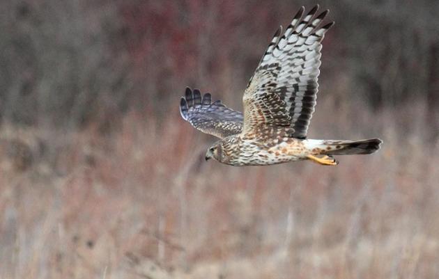 Seneca Meadows Wetland Preserve is an Important Bird Area