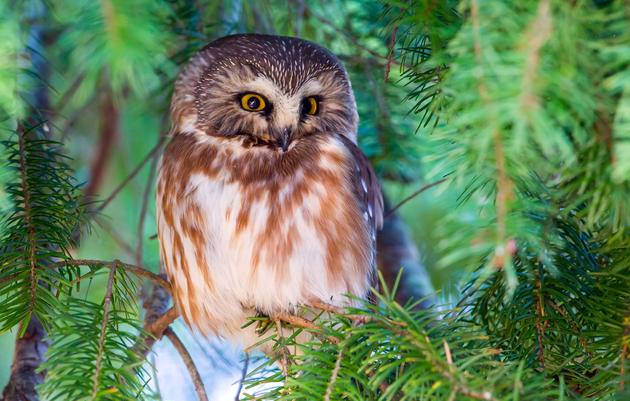 Light Touch Forest Management Makes Large Impact for Birds