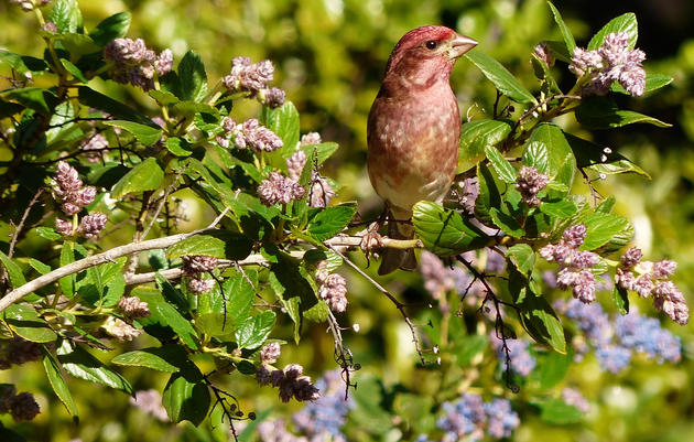 Seasonal tips for a bird-friendly backyard.