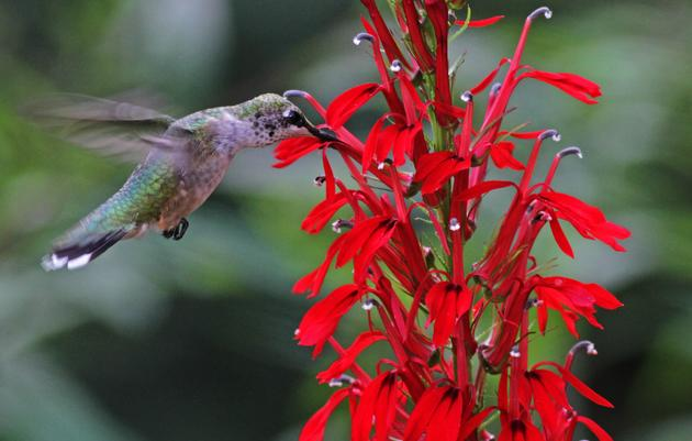 Spruce Up the Garden—and Attract and Protect Birds with Native Plants