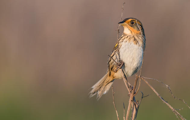 Best of 2019: Audubon New York in Action