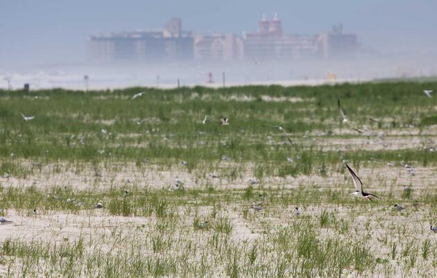 [PRESS RELEASE] Town of Hempstead Wins Audubon's First-Ever Share the Shore Award