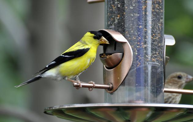 Choosing a Bird Feeder