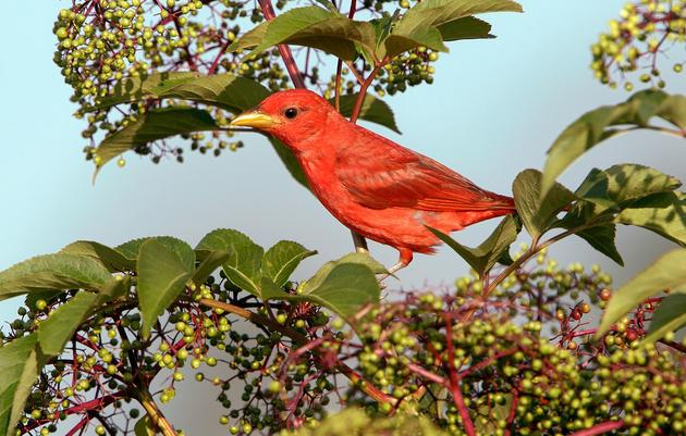 Grow These Native Plants So Your Backyard Birds Can Feast
