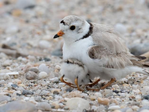 Protect Beach-Nesting Birds