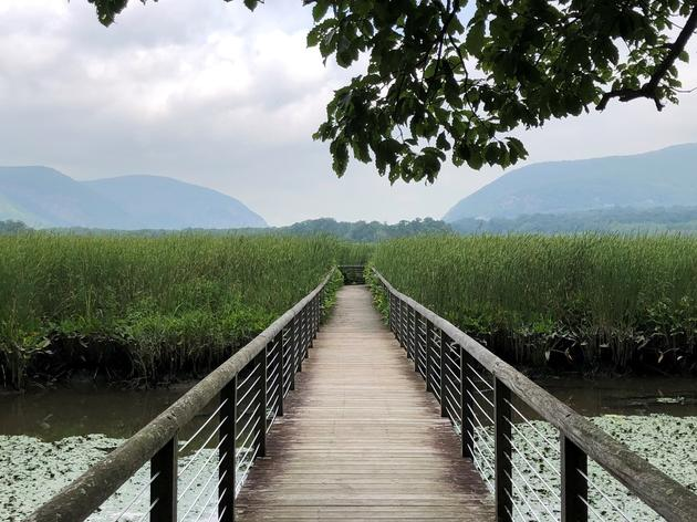 Updates: Audubon New York Center and Chapter Events, Trails, Birds