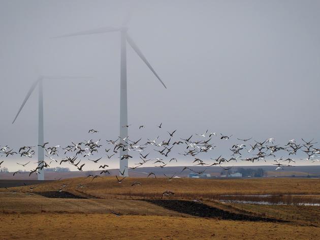 Renewable Energy and Birds