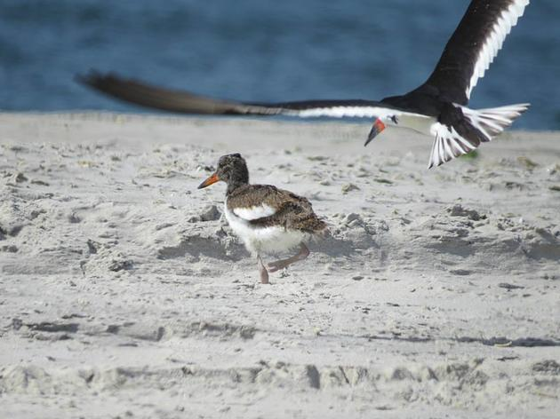 Sustained Conservation for Long Island