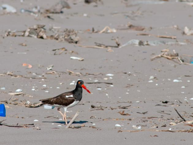 Sustainable Swaps to Keep Beaches Clean