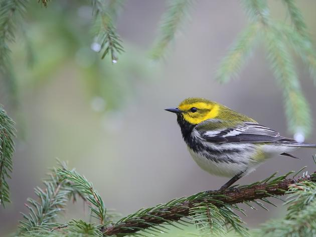 Top 10 New York Forest Birds