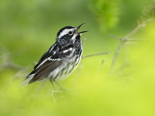 Great American Outdoors Act Will Benefit Birds, People, and Parks Across New York