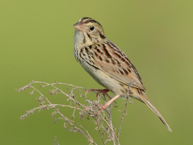 Grassland Birds Protected in New Renewable Energy Proposal