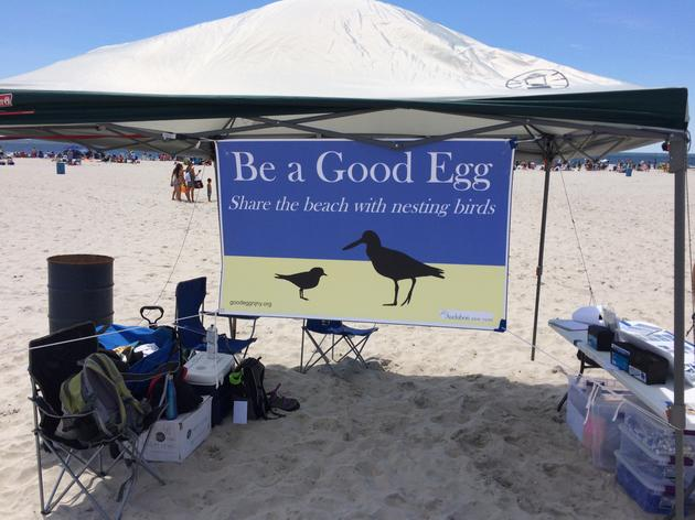 Over 1,000 Fourth of July Beach-goers Pledge to #SharetheShore