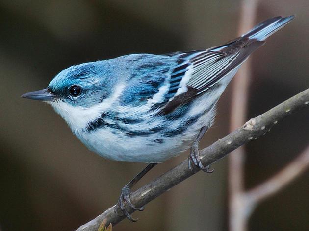 Philanthropist Makes Landmark Gift to Montezuma Audubon Center