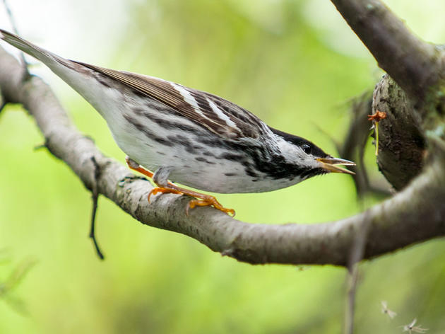 Millions of Migratory Birds Catch a Break as NYC Passes Bird-Friendly Building Law