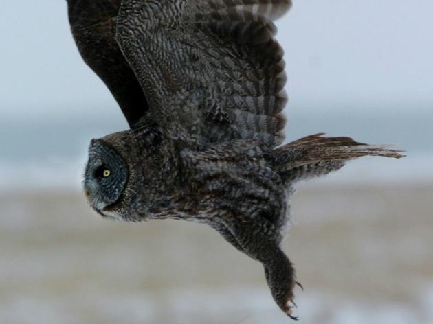 Birdwatchers enjoyed winter season
