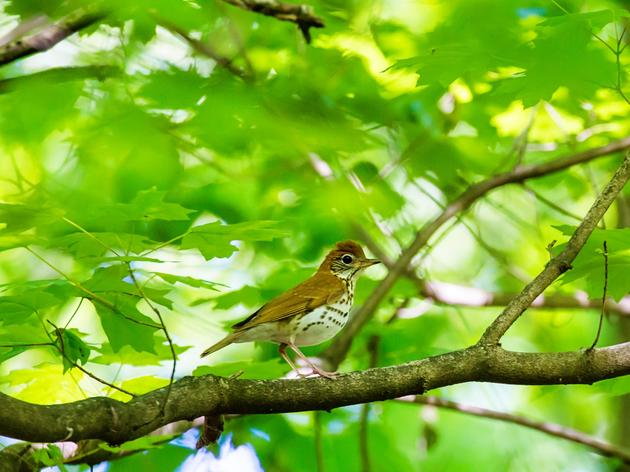 Domtar & AFF Announce Partnership for Forest Conservation and Bird Habitat