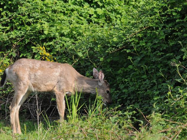 Project to Assess Impact of Deer on Forest Bird Habitat