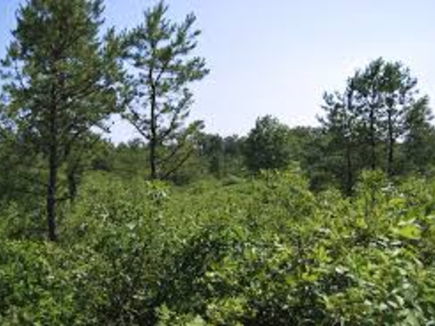 St. Lawrence County forest owners can apply for funding to address insufficient young forest habitat for targeted wildlife species