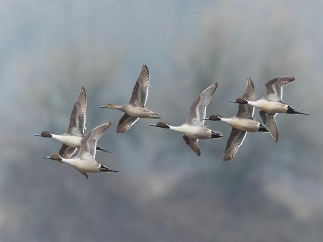MEMORANDUM OF SUPPORT - Bird-friendly Building Council Act