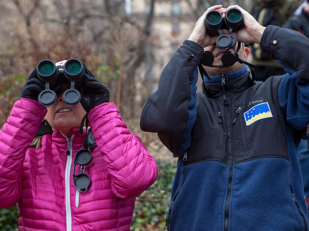 Local Birds Counted for Science during Audubon's 119th Annual Christmas Bird Count