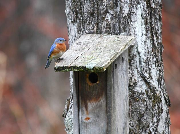 "Birdhouses: When ""Home Sweet Home"" is ""For the Birds"""